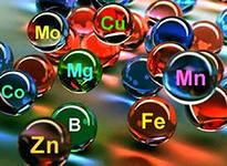 Макро- и микроэлементы в клубнике